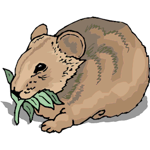 Wombat clipart Emf clipart download cliparts of