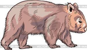 Wombat clipart Clipart Clipart Fans clipart wombat