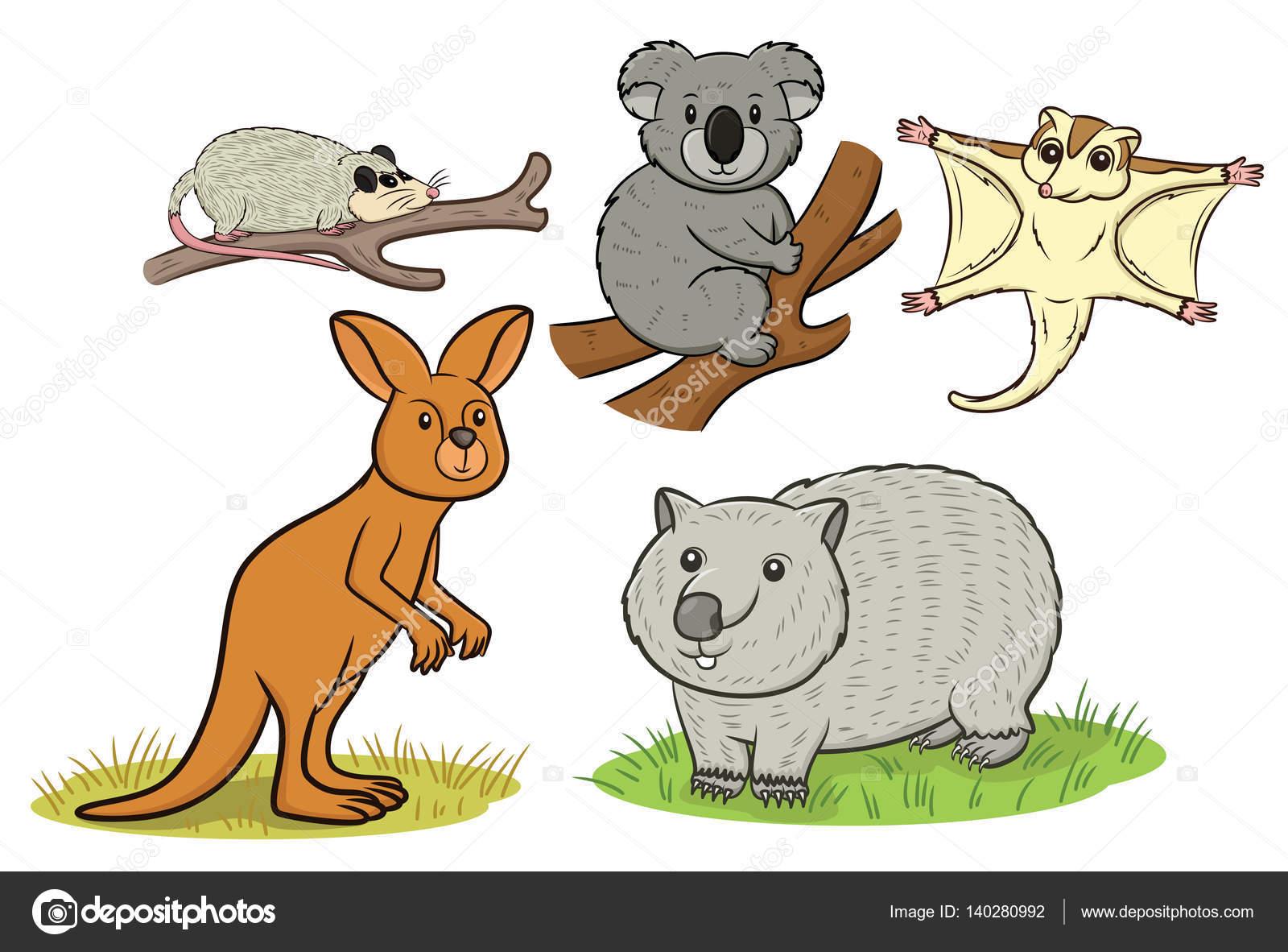 Wombat clipart australian possum Kangaroo Stock Vector Royalty and