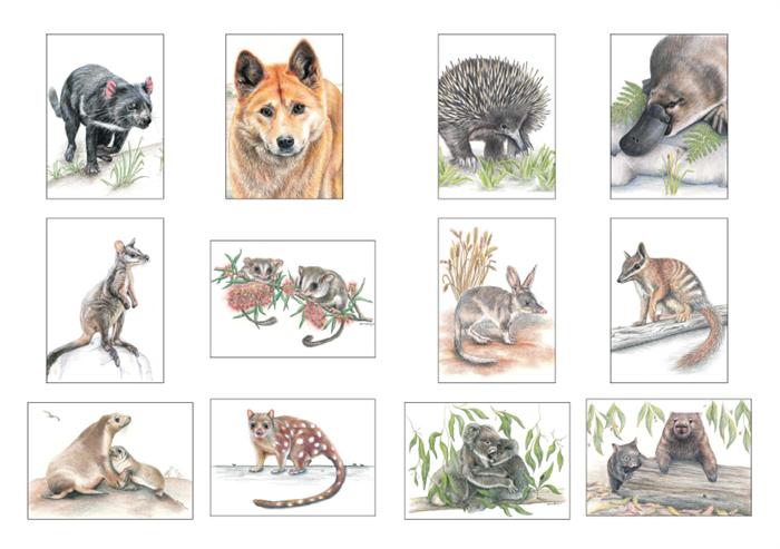 Wombat clipart australian possum (Australia Mini Possum) Cards wildlife