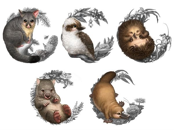 Wombat clipart australian possum The coin Bush Best Perth