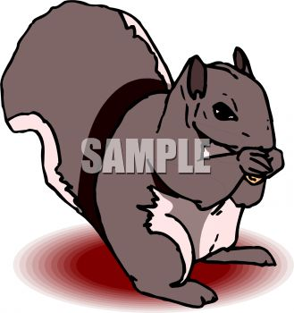 Nut clipart grey squirrel Squirrel Bay With Squirrel Eating