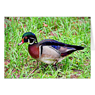 Wood Duck clipart state mississippi Mississippi Duck Card Wood Cards