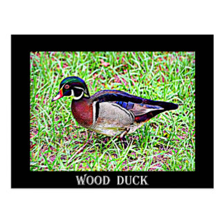Wood Duck clipart state mississippi Mississippi Duck Postcard Wood Cards