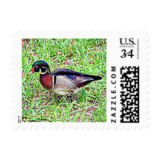 Wood Duck clipart carolina Cards Zazzle Postage Duck Mississippi