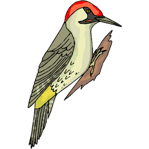 Bird clipart woodpecker Free Clipart Panda Images Woodpecker