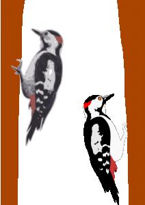 Woodpecker clipart Woodpecker Woodpecker Download Clip Art
