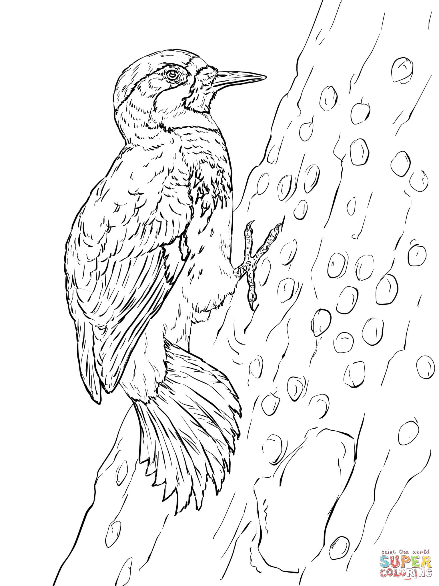 Woodpecker clipart vector Pages Woodpeckers Coloring Free Woodpecker