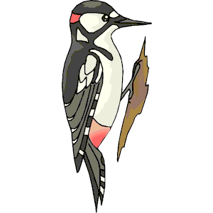 Bird clipart woodpecker Eps Woodpecker  free (wmf