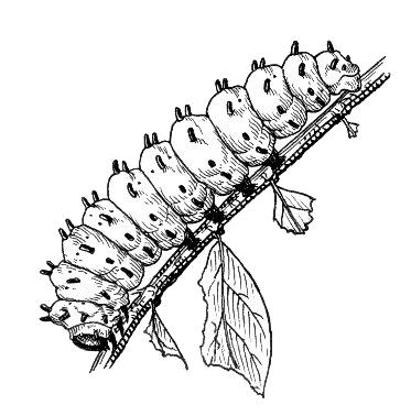 Worm clipart caterpiller Art Caterpillar Clip Caterpillar Download