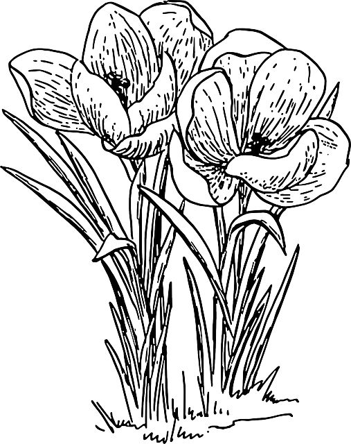 Plant clipart outline Flower pages on Coloring images