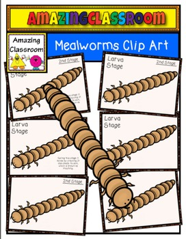 Beatle clipart mealworm Mealworms Meal and worm Lifecycle