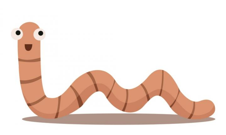Worm clipart tapeworm Needs everyone in home if