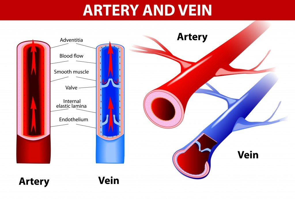 Wound clipart blood ABC » Veins Why Science