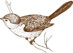 Wren clipart florida Art Branch on Graphics Bird