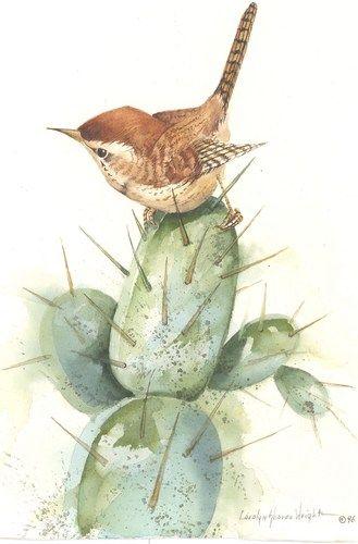 Wren clipart florida 11x8 Happy the bird 146