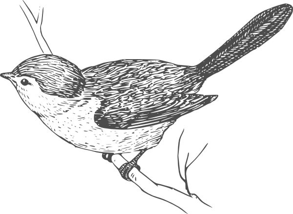 Wren clipart free bird Bird Clip Animal Grey vector