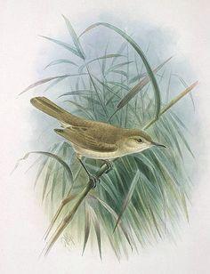 Wren clipart free bird Art Gorgeous Birds Art Clip