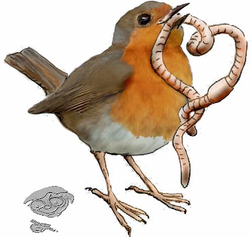 Wren clipart robin bird Eating Bird Clipart Clipart Worm