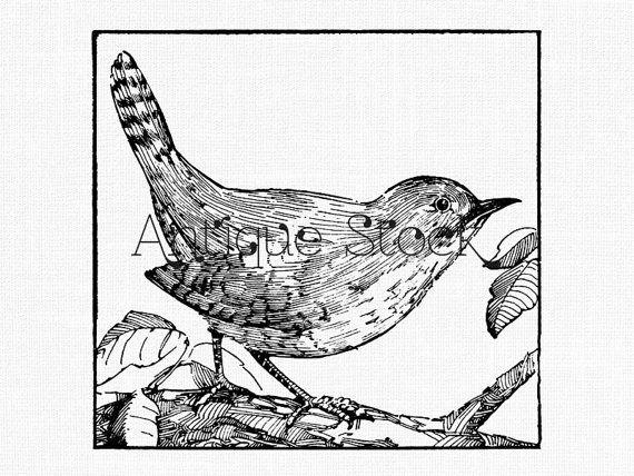 Wren clipart robin bird Line Bird Vintage Art Drawing