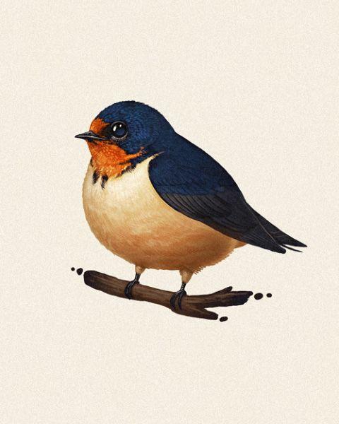 Wren clipart robin bird Art of Clip & Printables