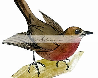 Wren clipart robin bird Robin Download Birds Red Breast
