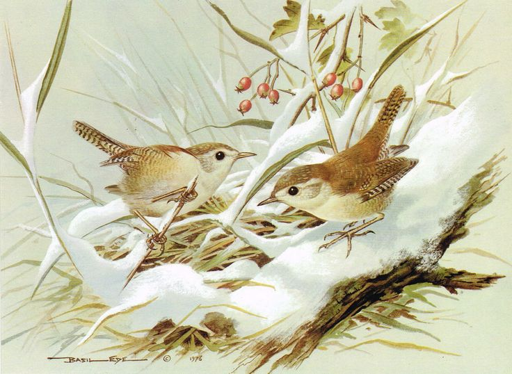 Wren clipart small bird Painting Vintage images Projects Ede