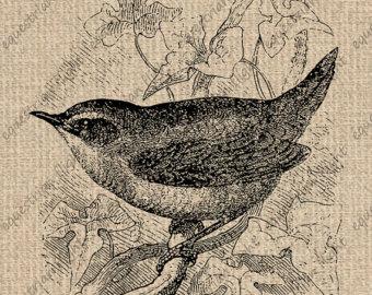 Wren clipart small bird Digital Antique Etsy Download Sheet