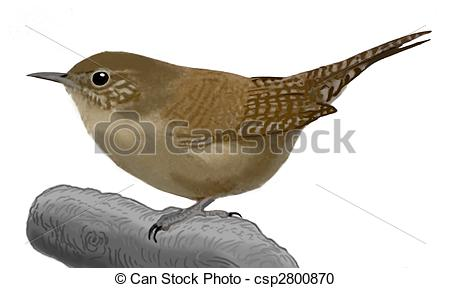 Wren clipart small bird Csp2800870 Troglodytes  House Wren