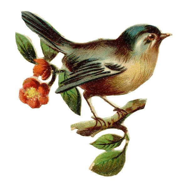 Wren clipart sparrow On featuring Art images Welcome