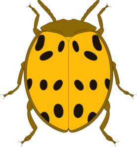Bugs clipart spotted Beetle at And Clip Clker