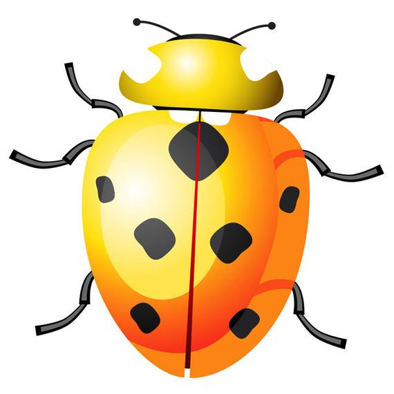 Yellow clipart ladybug Ladybug Yellow download Yellow Vector