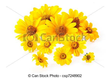 Yellow Flower clipart beautiful flower Beautiful Stock 80 flowers flowers