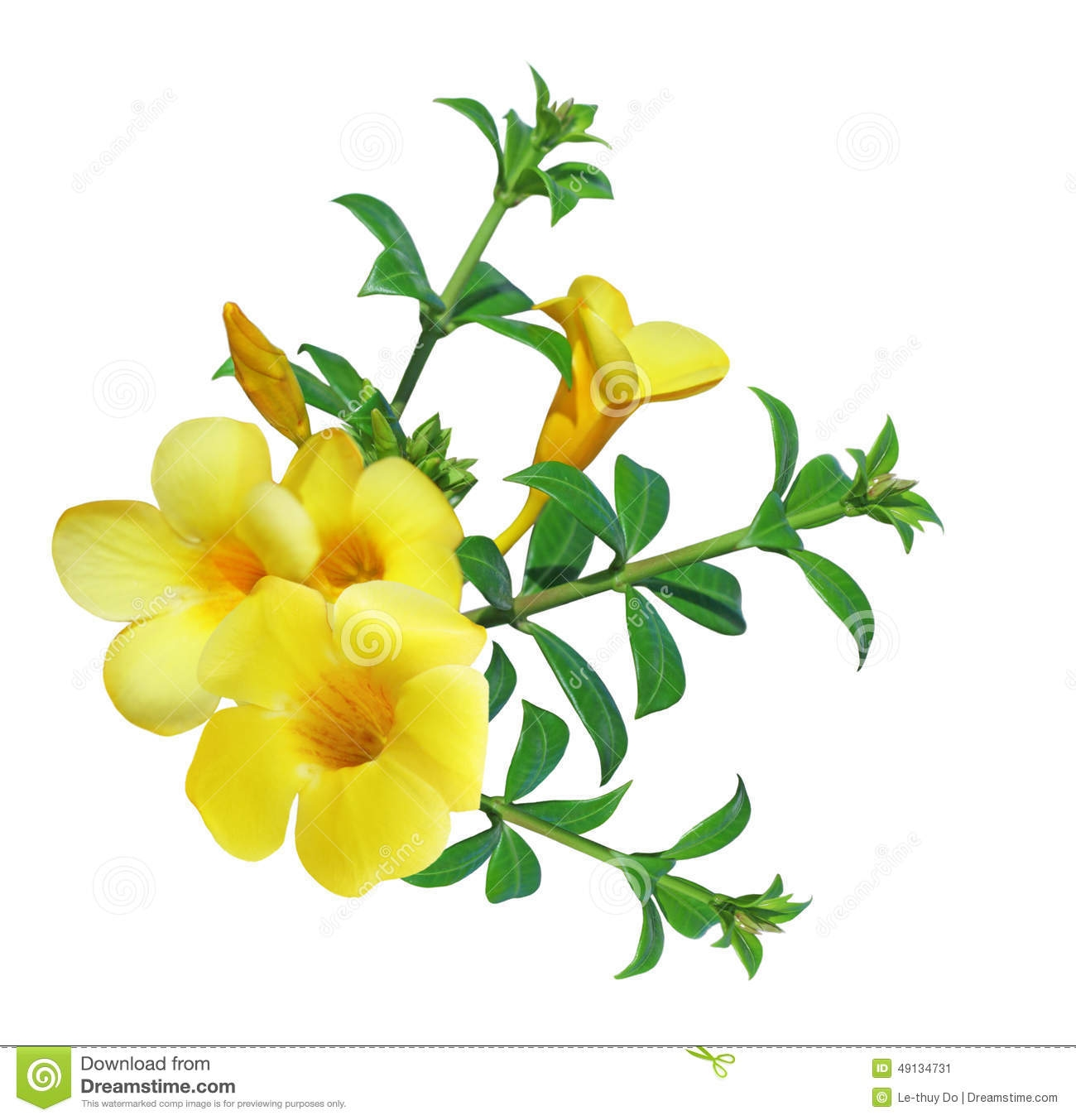 Yellow Flower clipart black and white Yellow Flower Clipart Black Gallery