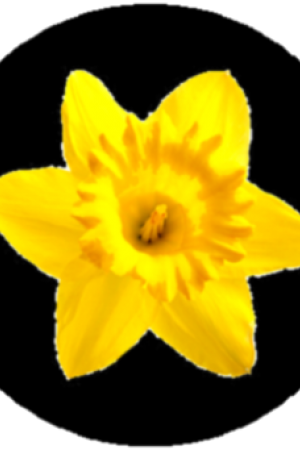 Yellow Flower clipart february flower – Moonglow Flower) March Flower)