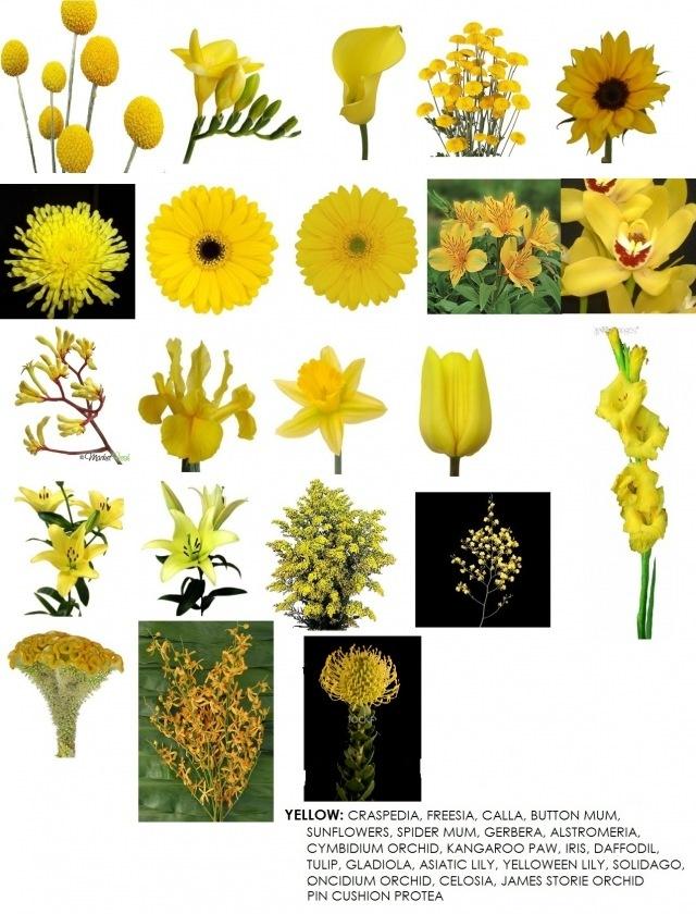 Yellow Flower clipart fuschia flower On best Pinterest images Yellow