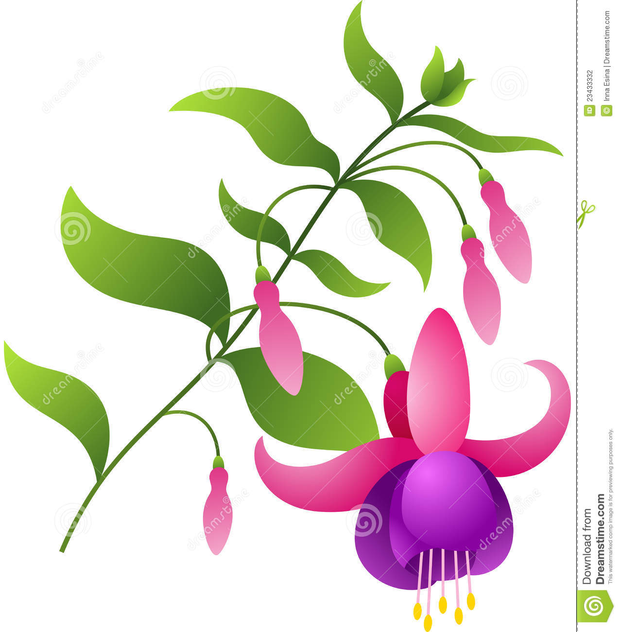Yellow Flower clipart fuschia flower Fuschia clipart Fuchsia collection Flower