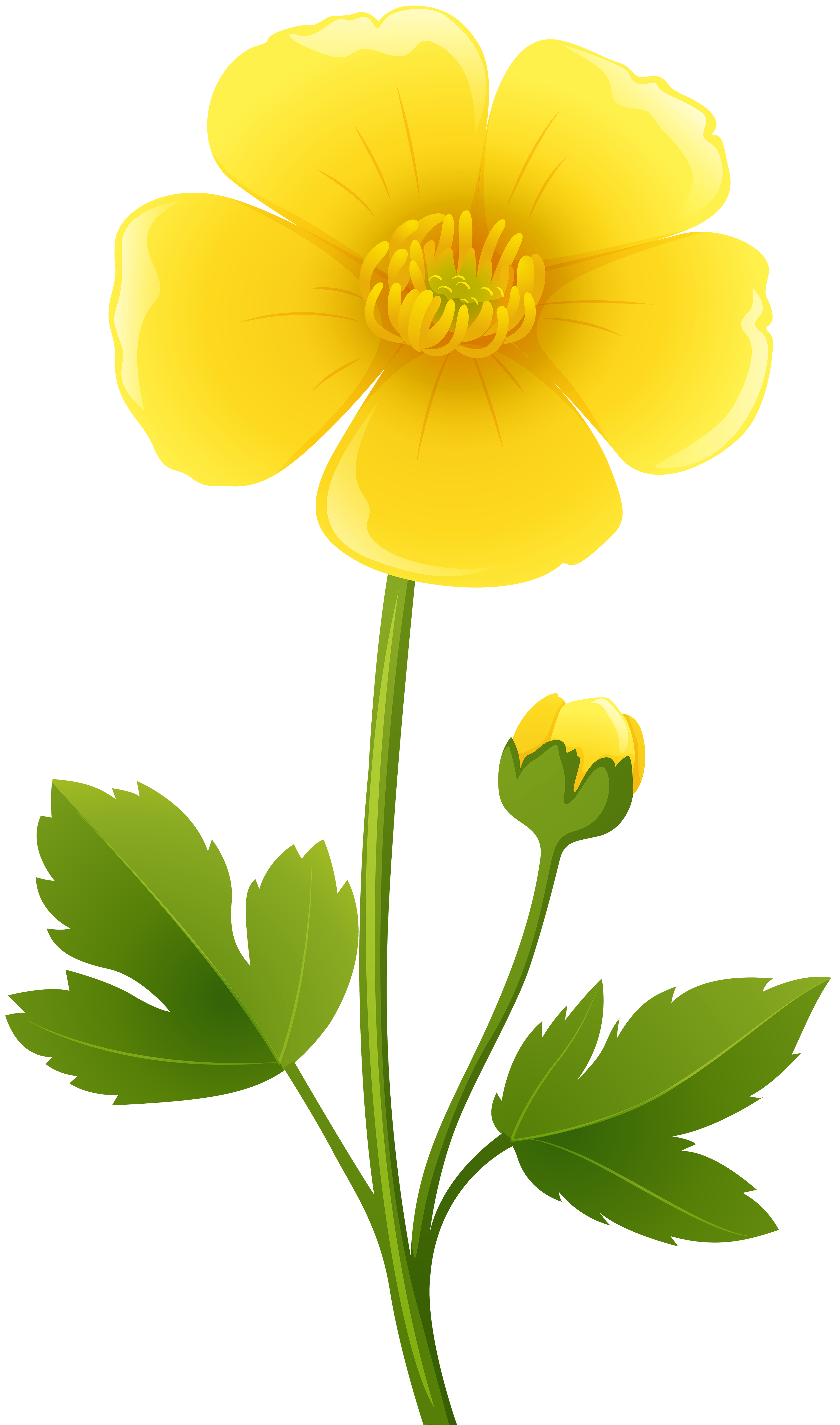 Yellow Flower clipart transparent Image full size  Flower