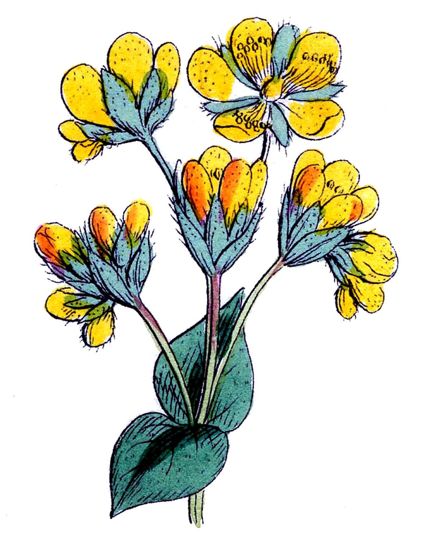 Wildflower clipart yellow flower The Yellow Fairy Yellow Flowers