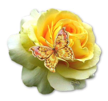 Yellow Rose clipart animated On Butterfly images All Picture