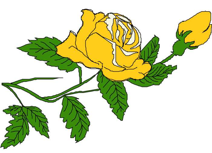 Yellow Rose clipart boarder Roses Yellow Clip Yellow Rose