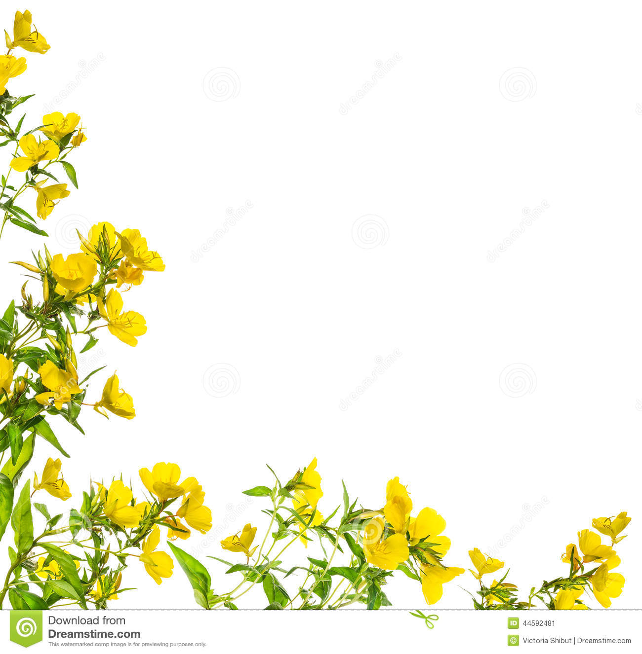 Yellow Rose clipart boarder Stock Borders Floral Corner Flowers