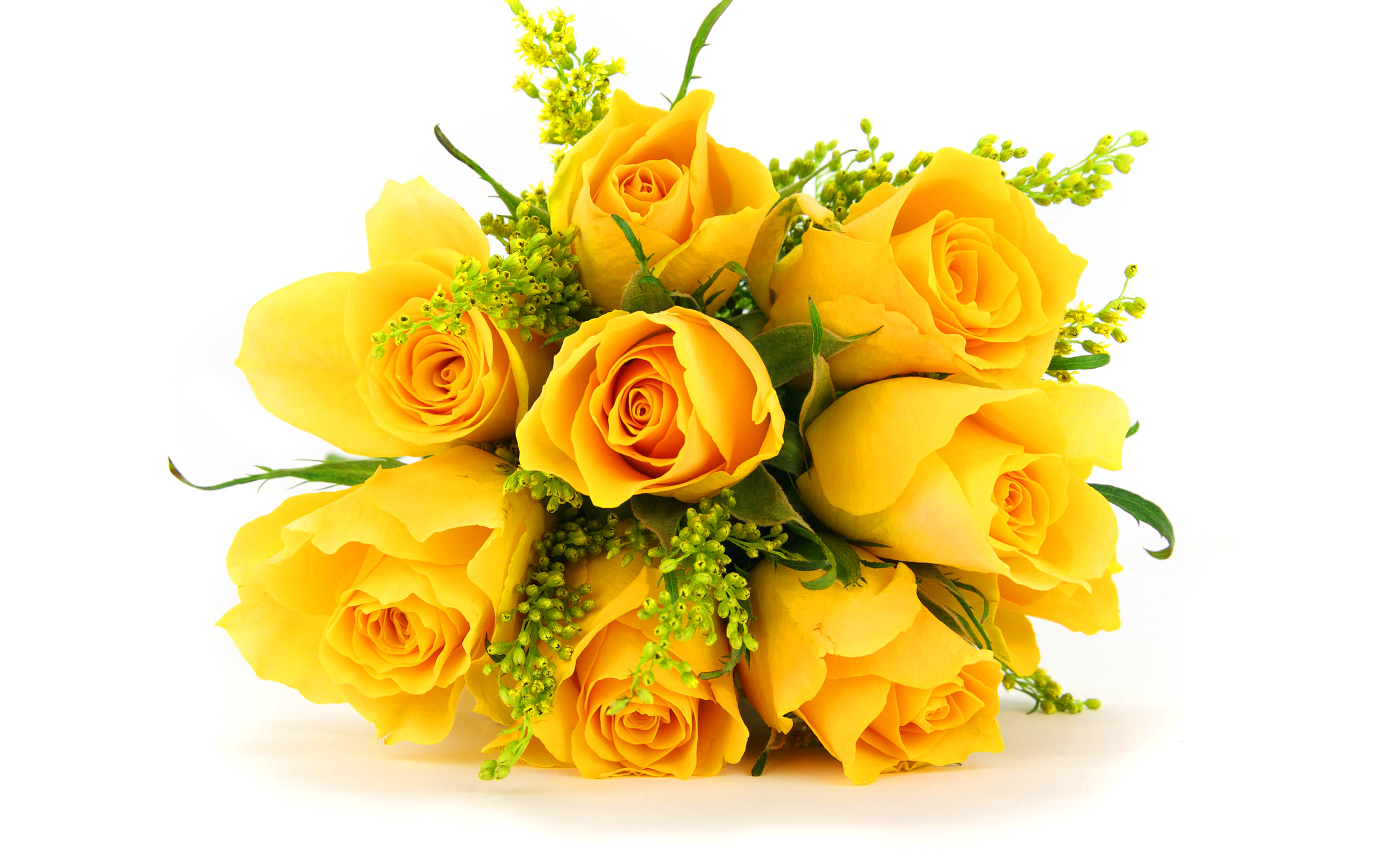 Drawn red rose yellow rose Images V Images HD Yellow