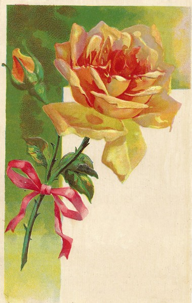 Yellow Rose clipart bud Antique Vintage Rose Pink Bud