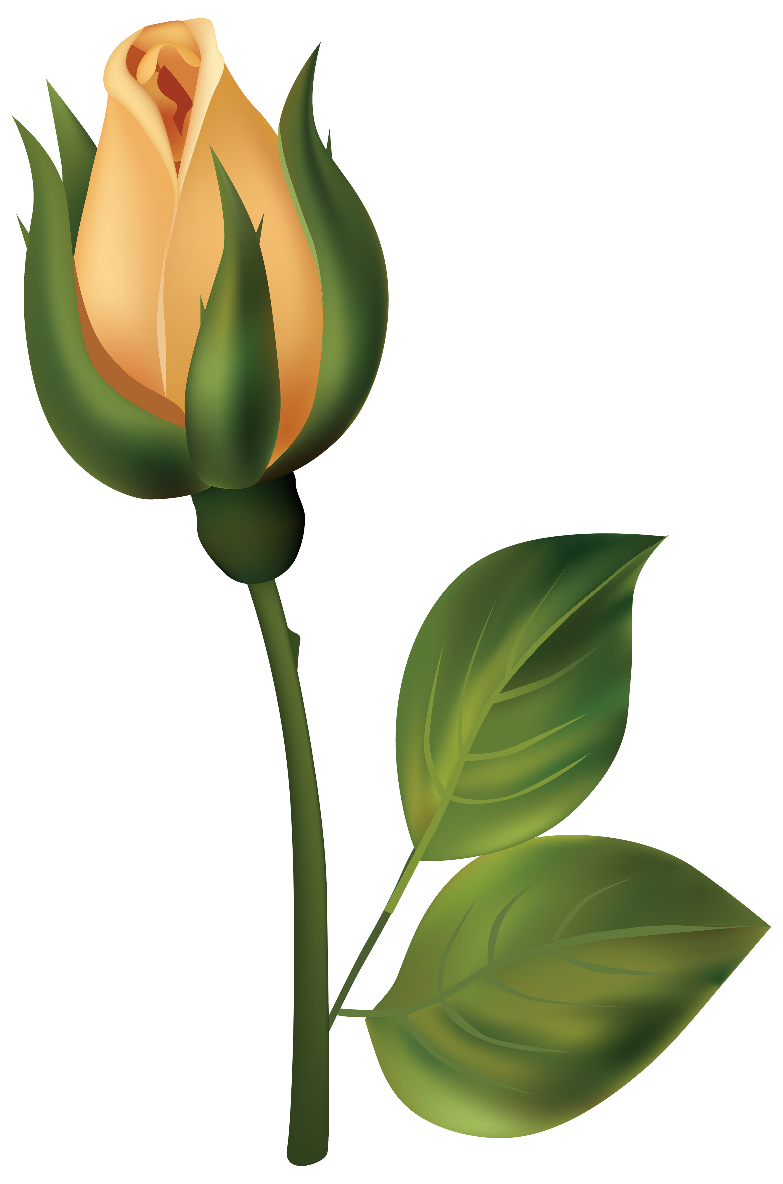 Yellow Rose clipart bud #8