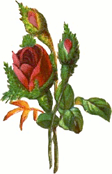 Long clipart rose bud #10