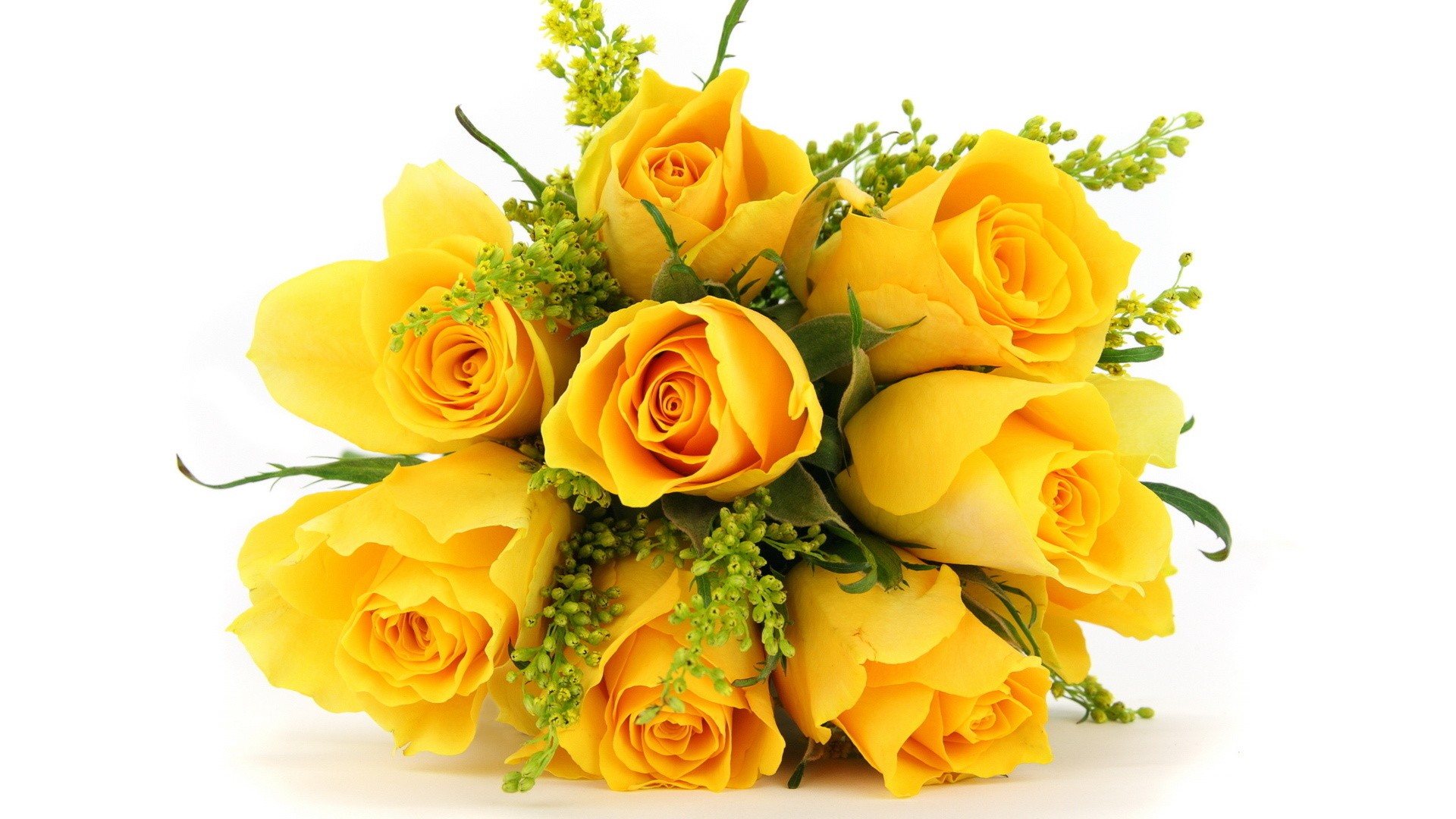 Yellow Rose clipart flower rose wallpaper Flowers  Birthday Flowers Quality