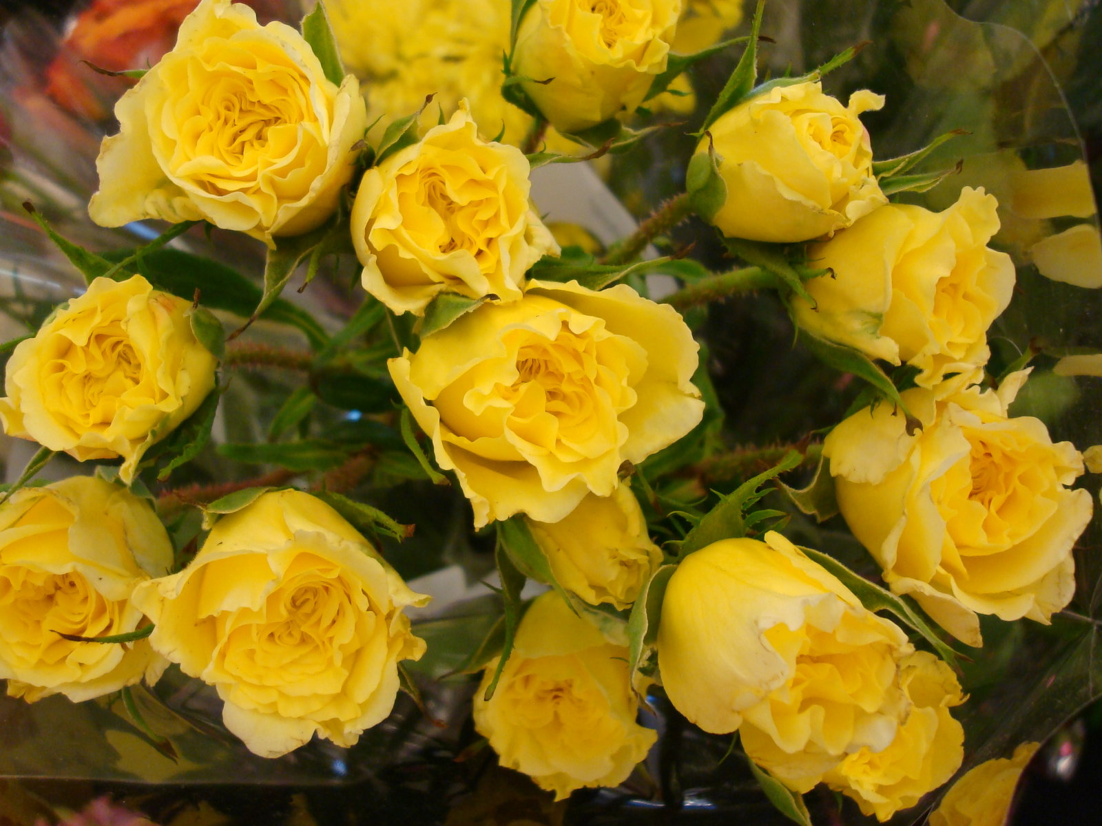 Yellow Rose clipart flower rose wallpaper Free roses Roses with pic