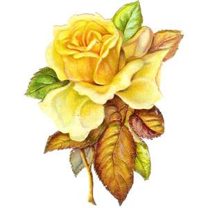 Yellow Rose clipart gardenia flower #12