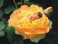 Yellow Rose clipart glitter #13